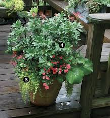 10 plants for year round containers