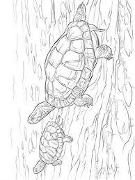 Kids N Fun 14 Kleurplaten Van Schildpadden