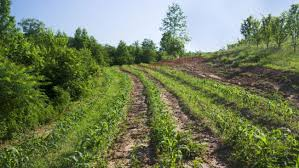 sistem pertanian polikultur