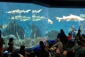 maritime aquarium in norwalk ct