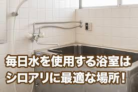 意外と多い浴室のシロアリ被害!自分でできる対策をご紹介|シロアリ110番