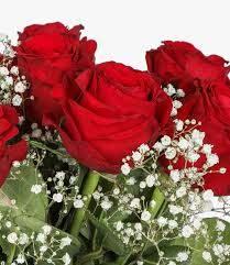 صورة وردة حمراء استمتع باجمل صور الورد الاحمر عجيب وغريب