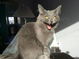 Image result for excited cat""