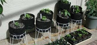 grow vegetables in your apartment