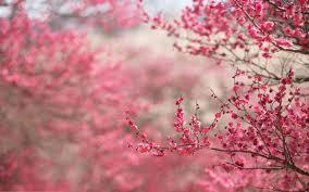 beauty beautiful tree nature landscape