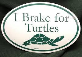 I Brake For Turtles Bumper Sticker Twindesigns Gift Shop
