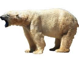 Vwaq Polar Bear Wall Decal Sticker White Bear Wall Art Animal Decor Mural For Sale Online
