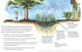 how does a rain garden work