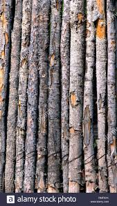 Rustic Wooden Poles Form Background Image Each Pole In Fence Still Has Its Bark Mostly Intact Stock Photo Alamy
