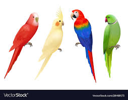 exotic birds macaws vector image