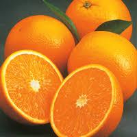 florida oranges delivered hand picked
