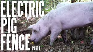 Pigs 101 Basic 2 Strand Electric Fence For Hogs On The Homestead Part 1 Youtube