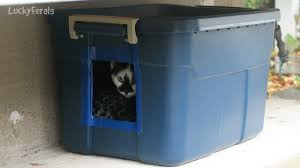 diy feral cat shelter for outdoor cats