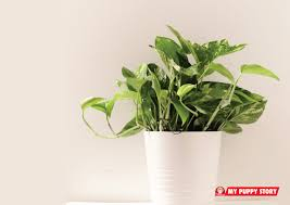 25 house plants which are poisonous to