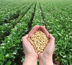 Soybean-A wonder crop – THE TIMES OF AFRICA