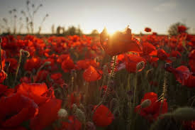lest we forget years of armistice day st george s society