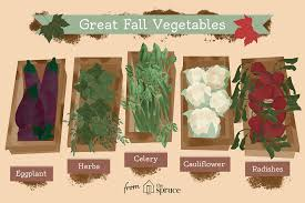 what vegetables are in season in fall