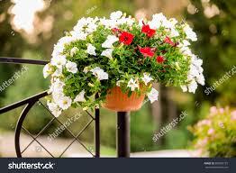 Outdoor Flower Pot Hanging On Steel Stock Photo Edit Now 506505727