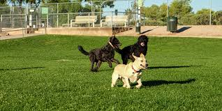 Dog Parks Mesa Parks Recreation Community Facilities