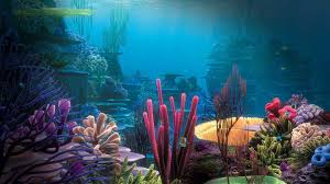 finding nemo backgrounds 70 pictures