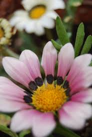 صور أزهار جميلة اجمل وحلى صور رائعة جدا