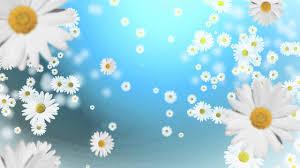 خلفية متحركة للمونتاج زهور Hd Youtube