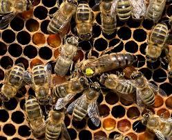 queen bee 1080p 2k 4k 5k hd
