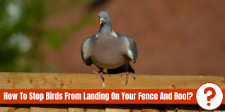 how to stop birds from landing on your