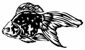 2020 Car Styling For Goldfish Vinyl Decal Sticker Car Window Wall Bumper Fish Cute Koi Oranda Fish From Redchinatown 1 01 Dhgate Com