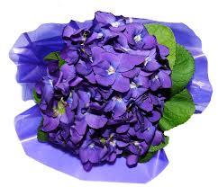 صور لـ زهور البنفسج عطر