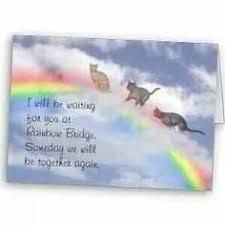 best cats memory quotes pics rainbow bridge images