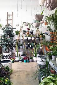care of houseplants