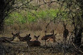 Shooting a Tiger at Bandhavgarh National Park and Tiger Reserve!