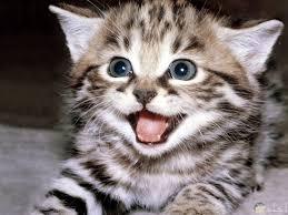 اجمل الصور الكيوت صور قطط جميلة ولطيفة جدا
