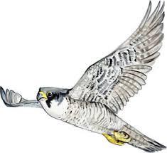 Peregrine Falcon Duck Hawk Flying Bird Vinyl Decal Sticker Auto Boat Rv Window Ebay