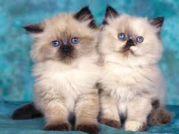 صور قطط اجمل صور قطط احلى صور قطة بيتي