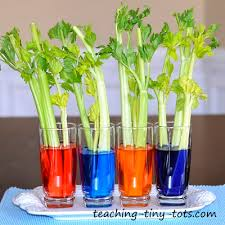 Image result for plant science experiments