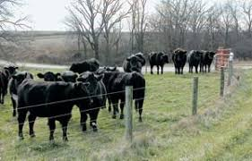 Electric Fence Innovations Revolutionize Livestock Grazing And Protection Grit