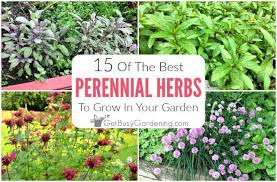 pdf free herbs for your