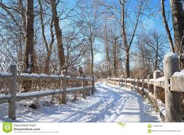 Winter Road In Forest Among Trees And Fence With Blue Sky And Snow Stock Image Image Of Canada Blue 110483783