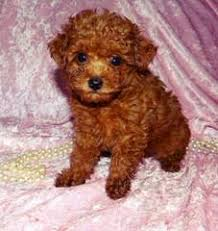 dog breeders in arkansas puppies for