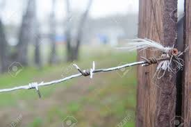 The Barbed Wire Is Tied On A Fence With A Red Ribbon Sharp Wire Stock Photo Picture And Royalty Free Image Image 101656381