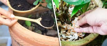 fertilizer for cans plants