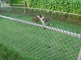 Climb Stopper Stop Dogs From Jumping Or Climbing Your Chain Link Fence Dog Proof Fence Dog Jumping Fence Dog Fence