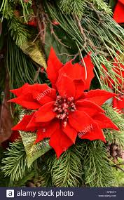 red poinsettia flower on a plant