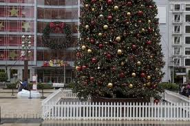San Francisco Christmas Tree Picture Photo Information