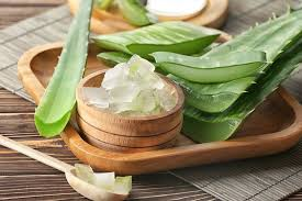 Aloe Vera: Nutritional Facts, Benefits, Weight Loss, and Side Effects