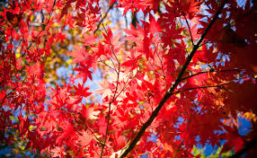 best autumn trees and plants burke s