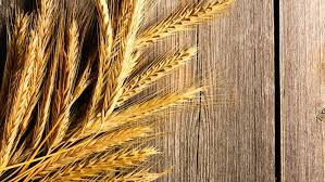 the health benefits of wheat germ