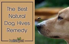 natural dog hives remes home remedy